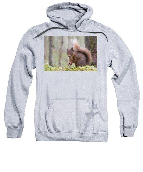 Red Squirrel - Scottish Highlands #8 Sweatshirt