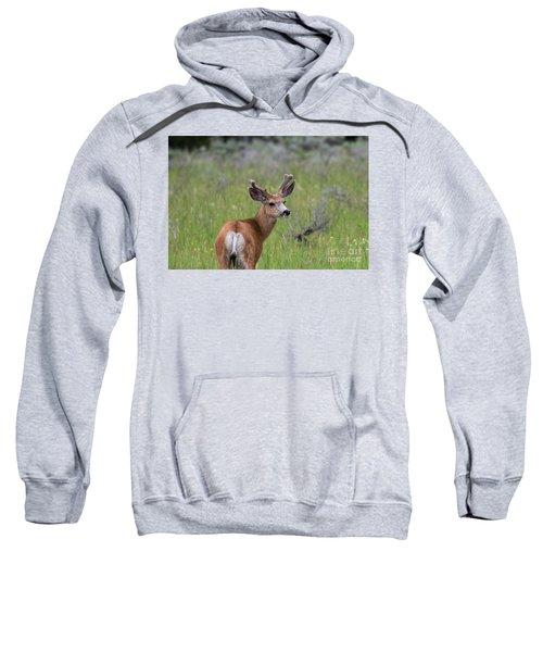 A Deer In Yellowstone National Park  Sweatshirt