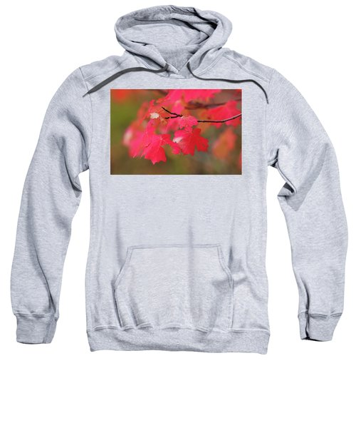 A Flash Of Autumn Sweatshirt