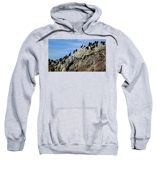 A Gulp Of Cormorants Sweatshirt by Sandy Taylor