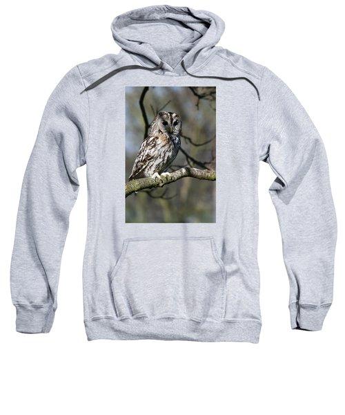 A Tawny Owl  Sweatshirt