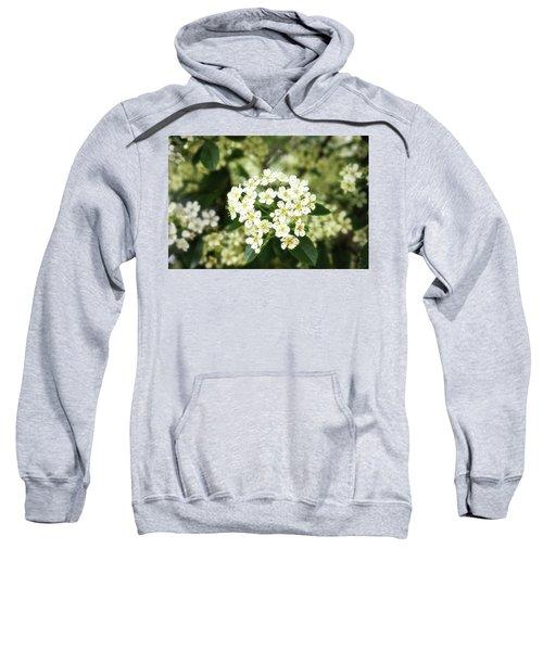 A Thousand Blossoms 3x2 Sweatshirt