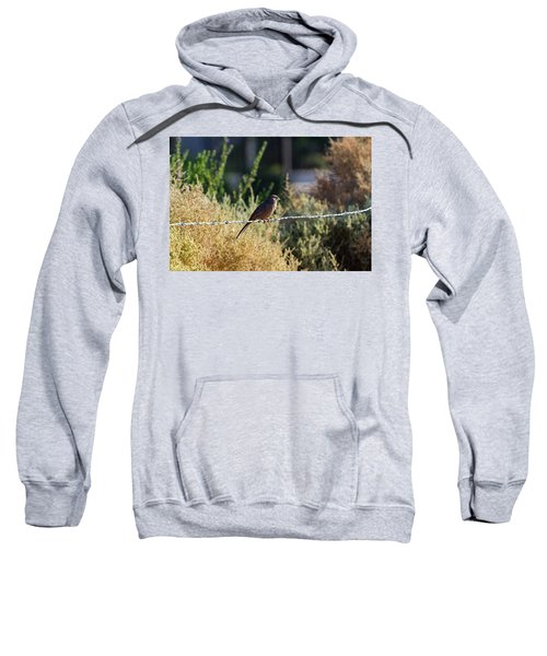 Abert's Towhee Sweatshirt