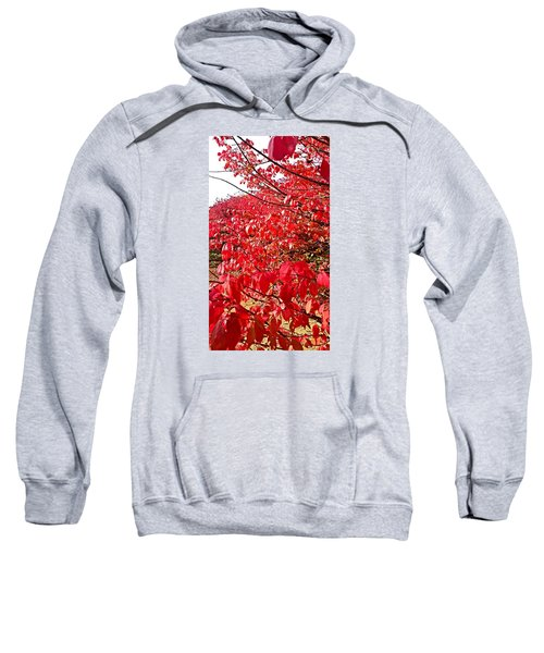Ablaze Sweatshirt by Jana E Provenzano