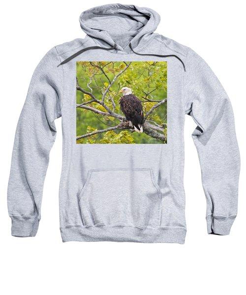 Adult Bald Eagle Sweatshirt