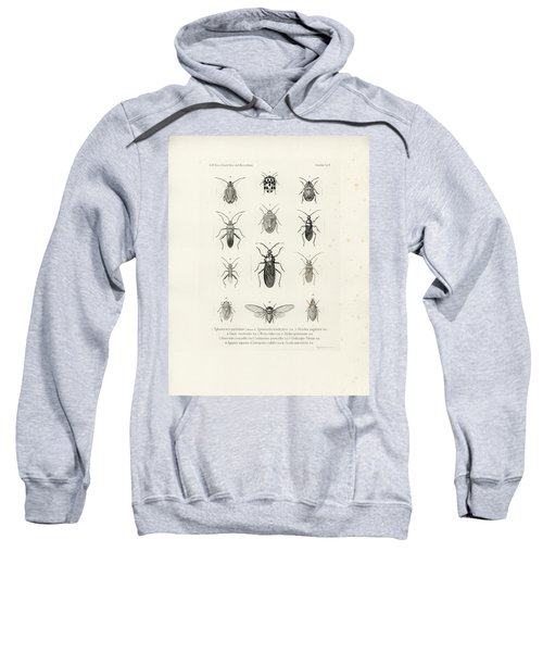 Sweatshirt featuring the drawing African Bugs And Insects by W Wagenschieber