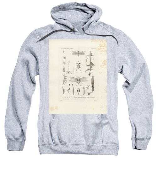 Sweatshirt featuring the drawing African Termites And Their Anatomy by W Wagenschieber