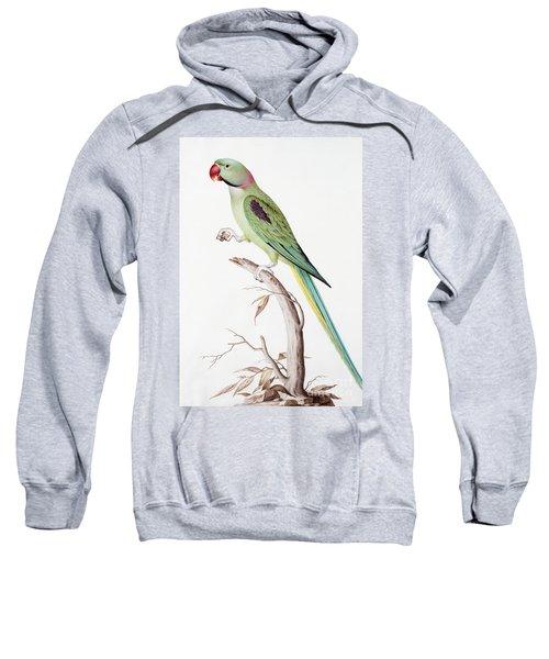 Alexandrine Parakeet Sweatshirt by Nicolas Robert