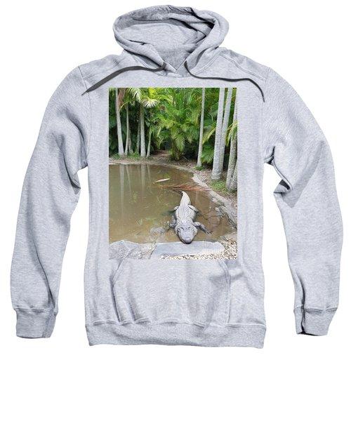 Alligator  Sweatshirt