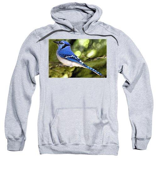 Blue Jay Bokeh Sweatshirt