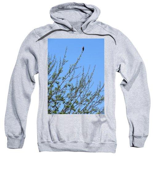American Kestrel Atop Pecan Tree Sweatshirt