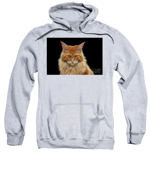 Angry Ginger Maine Coon Cat Gazing On Black Background Sweatshirt