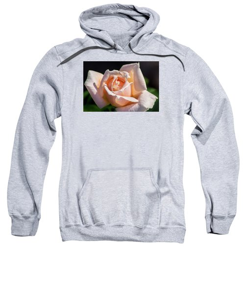 Another Beautiful Pink Rose Sweatshirt