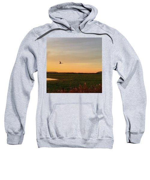 Another Iphone Shot Of The Swan Flying Sweatshirt