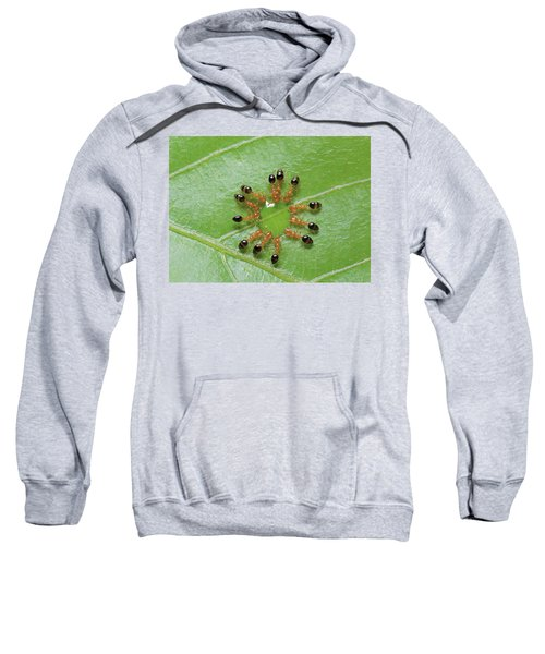 Ant Monomorium Intrudens Group Drinking Sweatshirt by Takashi Shinkai