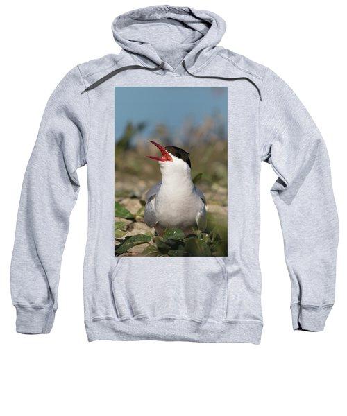 Arctic Tern - St John's Pool, Scotland Sweatshirt