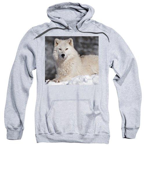 Arctic Wolf... Sweatshirt