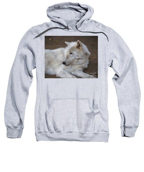 Arctic Wolf, San Diego Zoo Sweatshirt