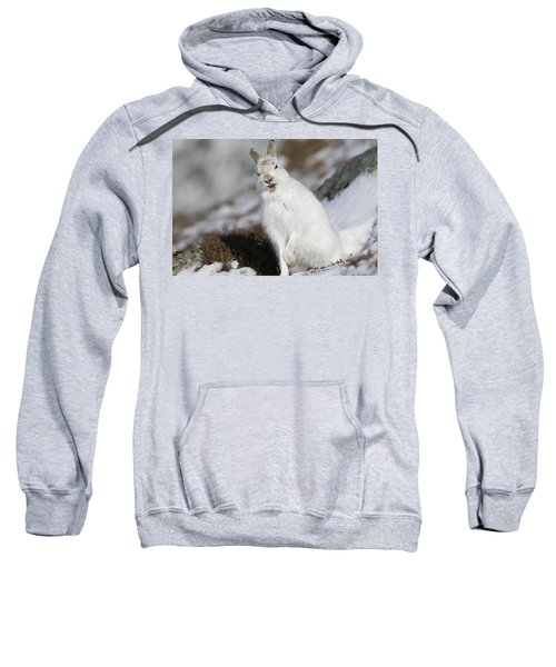 Are You Kidding? - Mountain Hare #14 Sweatshirt