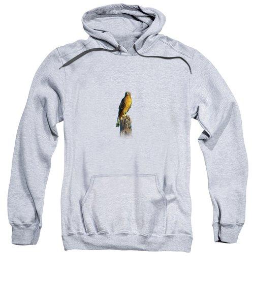 Northern Harrier Hawk Sweatshirt