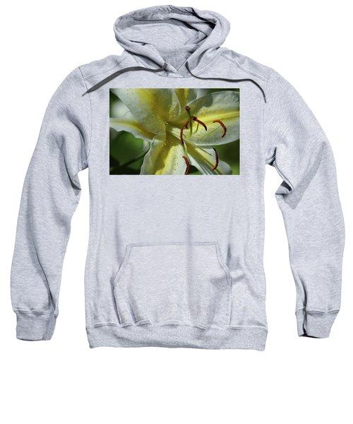 Asiatic Lily No 2 Sweatshirt