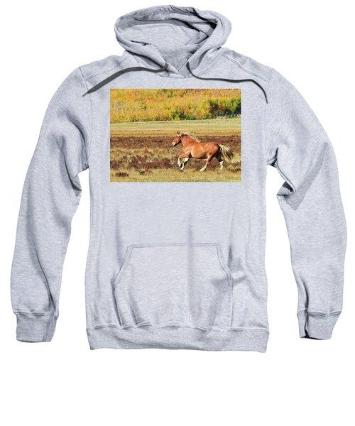 Aspen And Horsepower Sweatshirt