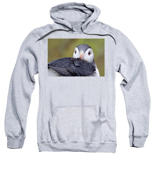 Atlantic Puffin With Rain Drops Sweatshirt