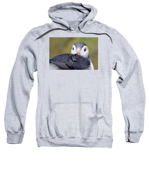 Atlantic Puffin With Rain Drops Sweatshirt