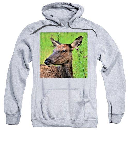Attentive Yearling Sweatshirt