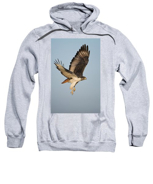 Augur Buzzard Buteo Augur Flying Sweatshirt by Panoramic Images