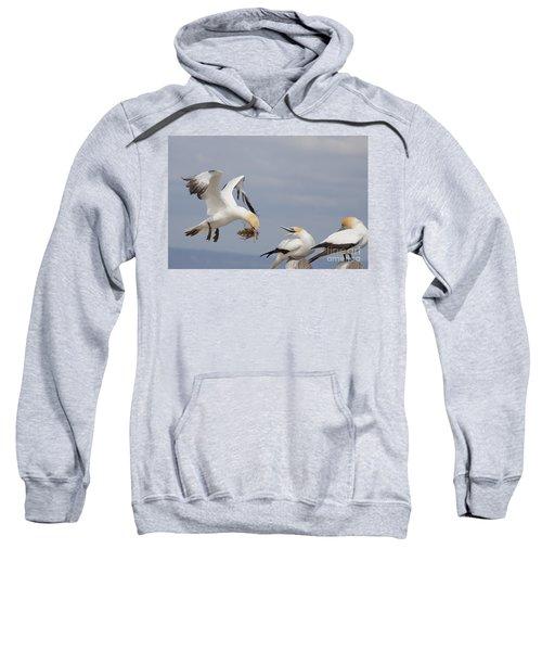 Australasian Gannet With Nesting Material Sweatshirt