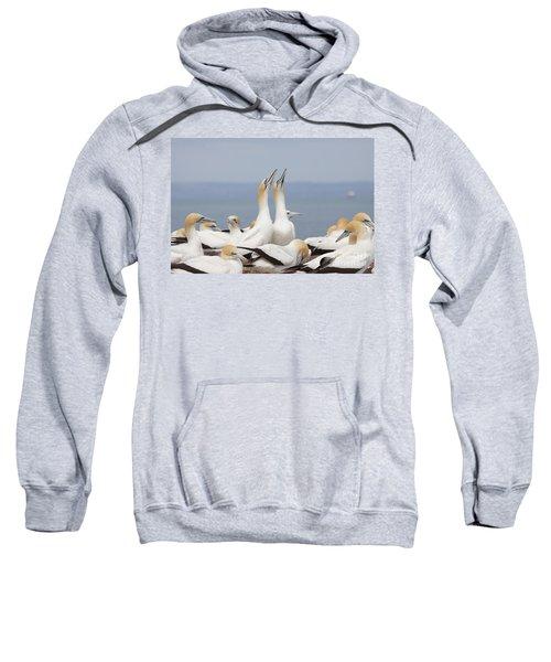 Australasian Gannets Courting Sweatshirt