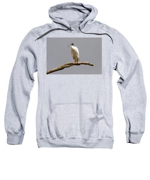 Australian White Ibis Perched Sweatshirt