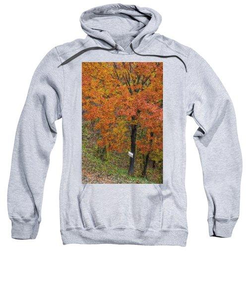 Autumn Tree Sweatshirt