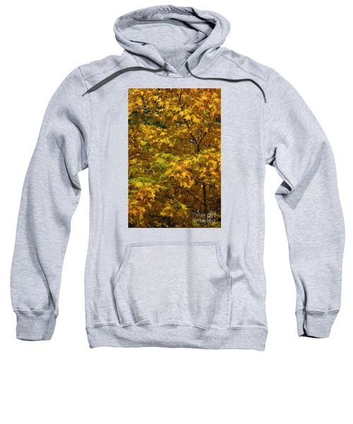 Autumnal Leaves And Trees 2 Sweatshirt