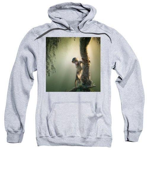Baby Baboon In Tree Sweatshirt