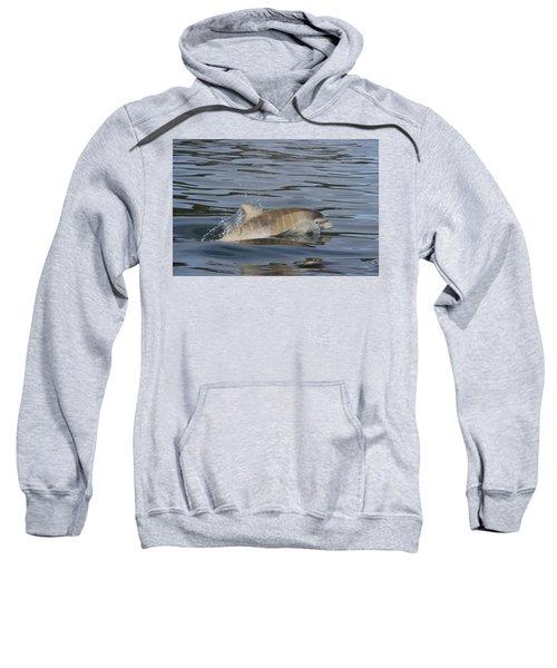 Baby Bottlenose Dolphin - Scotland  #35 Sweatshirt