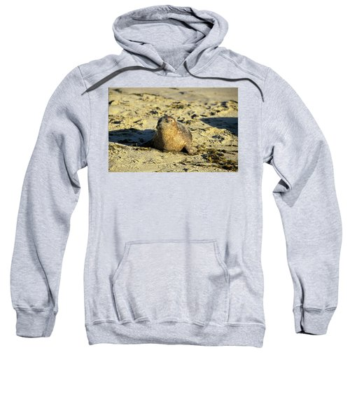 Baby Seal In Sand Sweatshirt