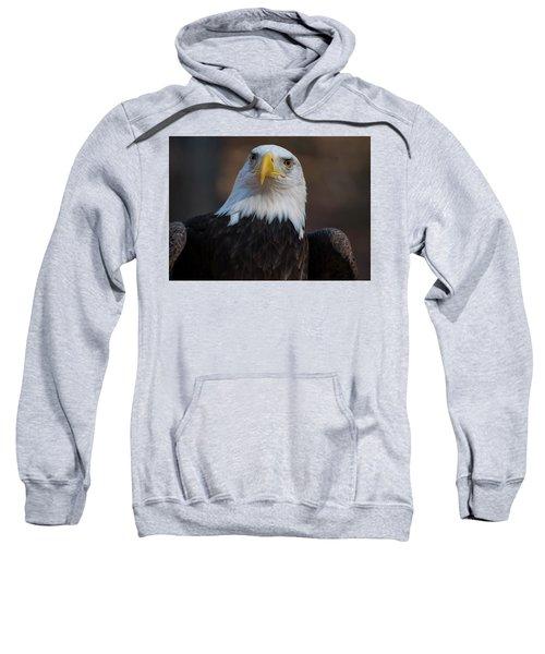Bald Eagle Looking Right Sweatshirt