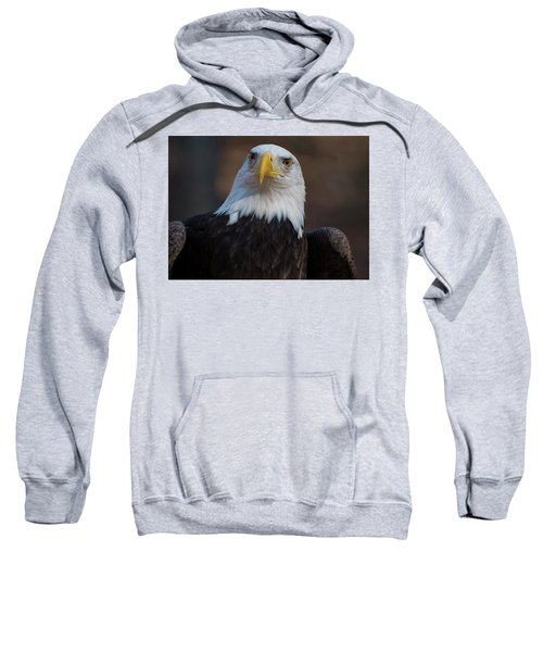 Bald Eagle Looking Right Sweatshirt