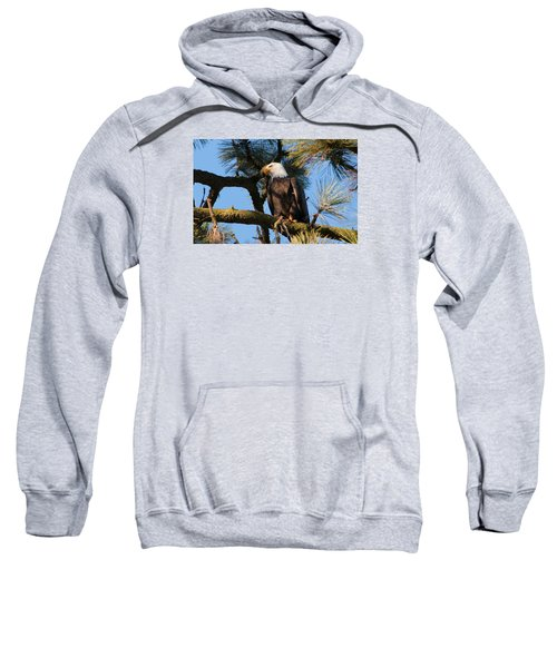 Bald Eagle Perch Sweatshirt