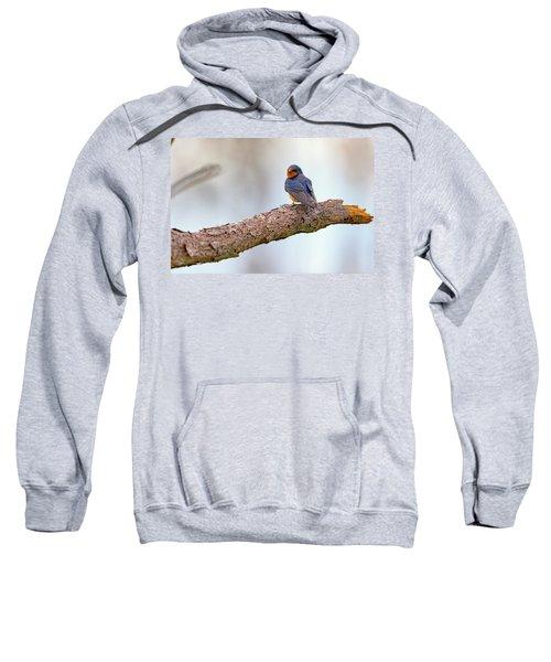 Barn Swallow On Assateague Island Sweatshirt