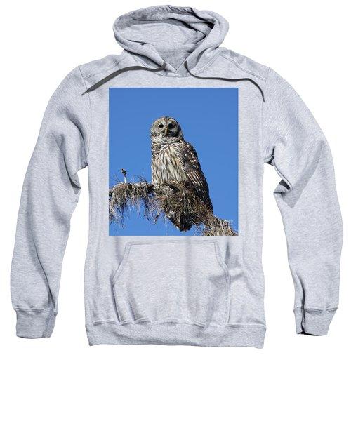 Barred Owl Portrait Sweatshirt
