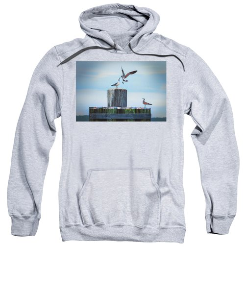 Battle Of The Gulls Sweatshirt