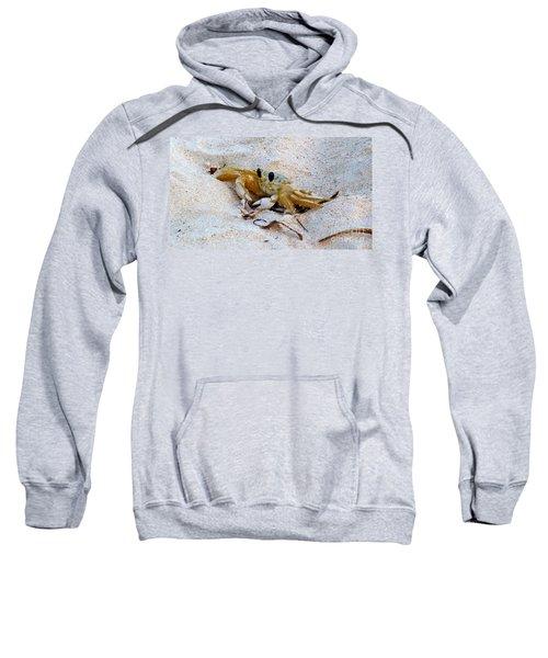 Beach Crab Sweatshirt
