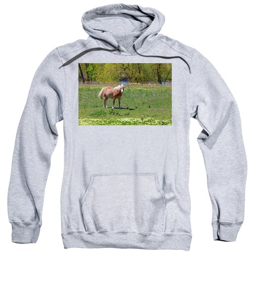 Beautiful Blond Horse And Four Little Birdies Sweatshirt by James BO Insogna