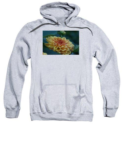 Beautiful Dahlia 2 Sweatshirt