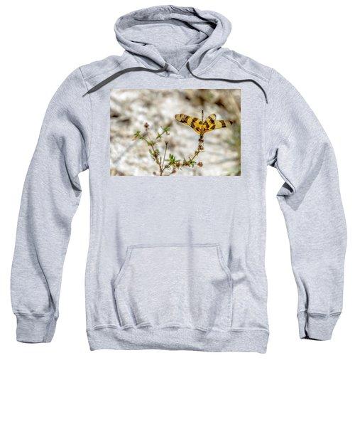 Beautiful Dragonfly Sweatshirt