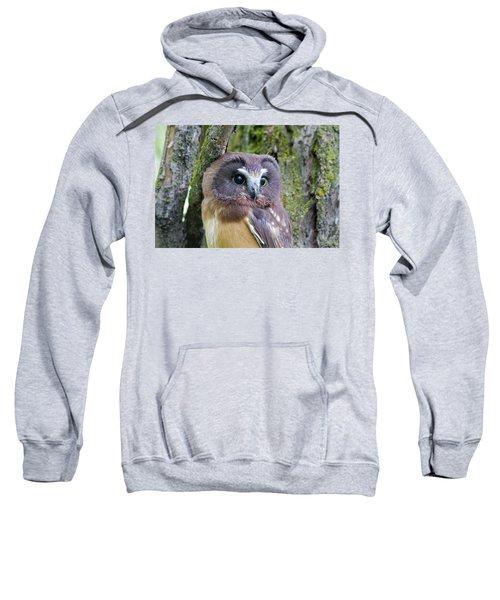 Beautiful Eyes Of A Saw-whet Owl Chick Sweatshirt
