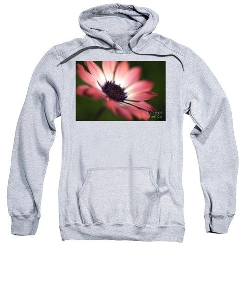 Beautiful Rich African Daisy Zion Red Flower Sweatshirt